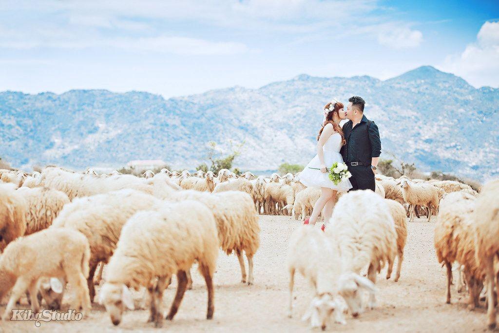 Đồng cừu Suối Nghệ – Địa chỉ chụp ảnh siêu 'hot' ở Vũng Tàu